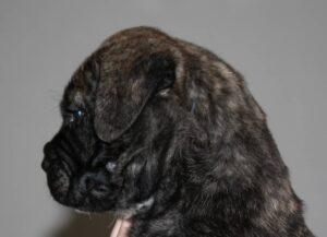 Arthur 6 uger gammel