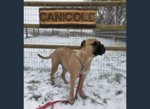 CaniCold i snevejr